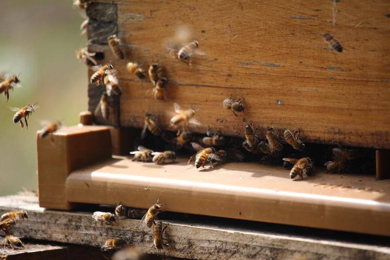 zenitude-profonde-le-mag-goodplanet-abeilles