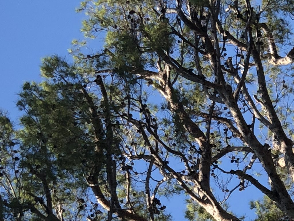 pins-arbres-ciel-bleu-zenitude-profonde-le-mag