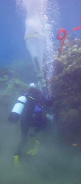 plongée corse biodiversite-NoémieMichez