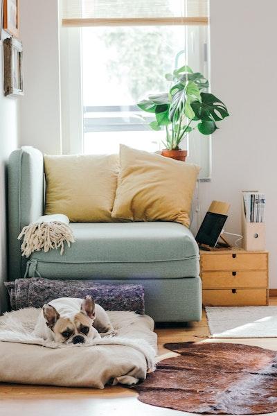 3 idées productives pour s'occuper pendant la quarantaine
