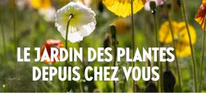 le jardin des plantes depuis chez vous zenitudeprofondelemag.com
