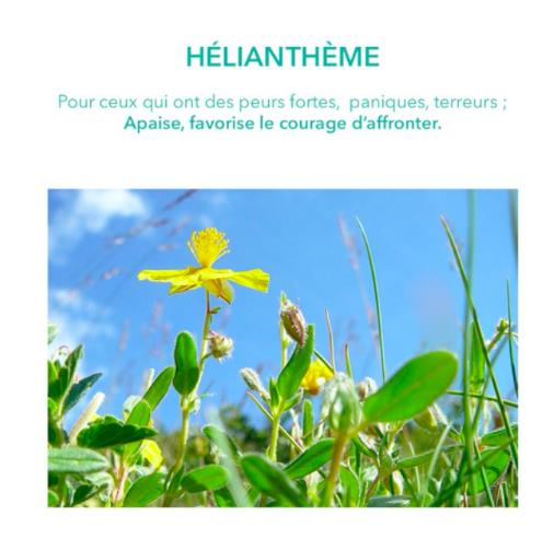 helianthe-fleur de bach-emotions-elixirs&co