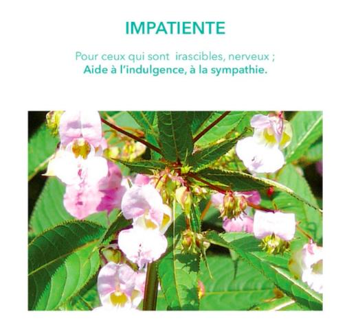 impatiente-fleur de bach-emotions-elixirs&co